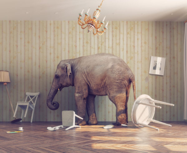 elephant knocked over furniture in house